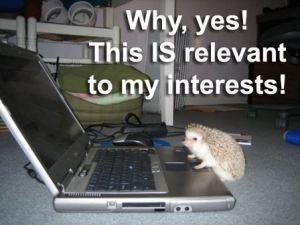 Hedgehog viewing the internet.